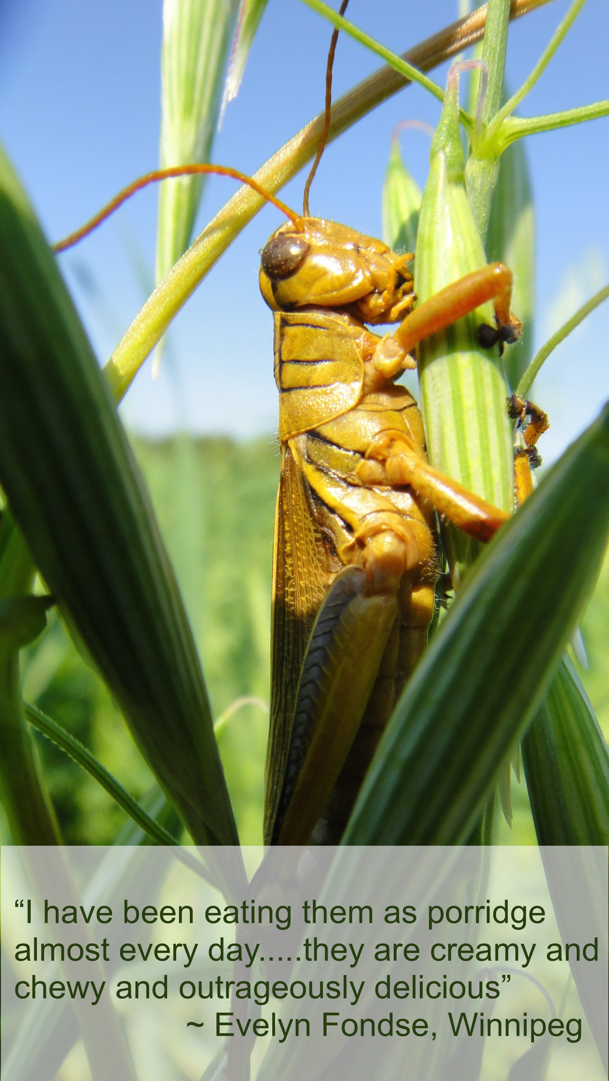Grasshopper Sm w.testimonial