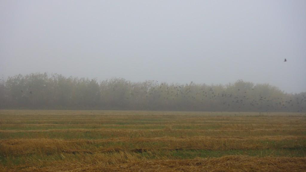 birds on field sm